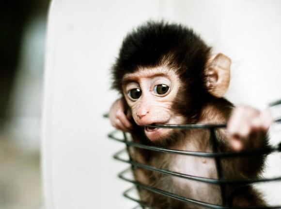 Ya no somos monos; la app de empresa está aquí